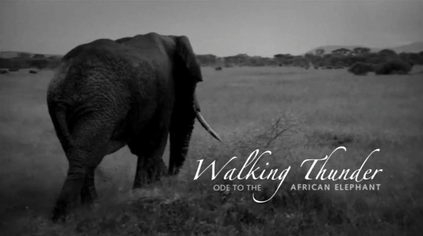 Наследството на Кристо от 120 милиона долара отива за слоновете в Африка (СНИМКА)