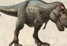 тиранозаврите