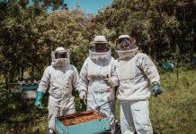 Кое предпазва пчеларите от вируси
