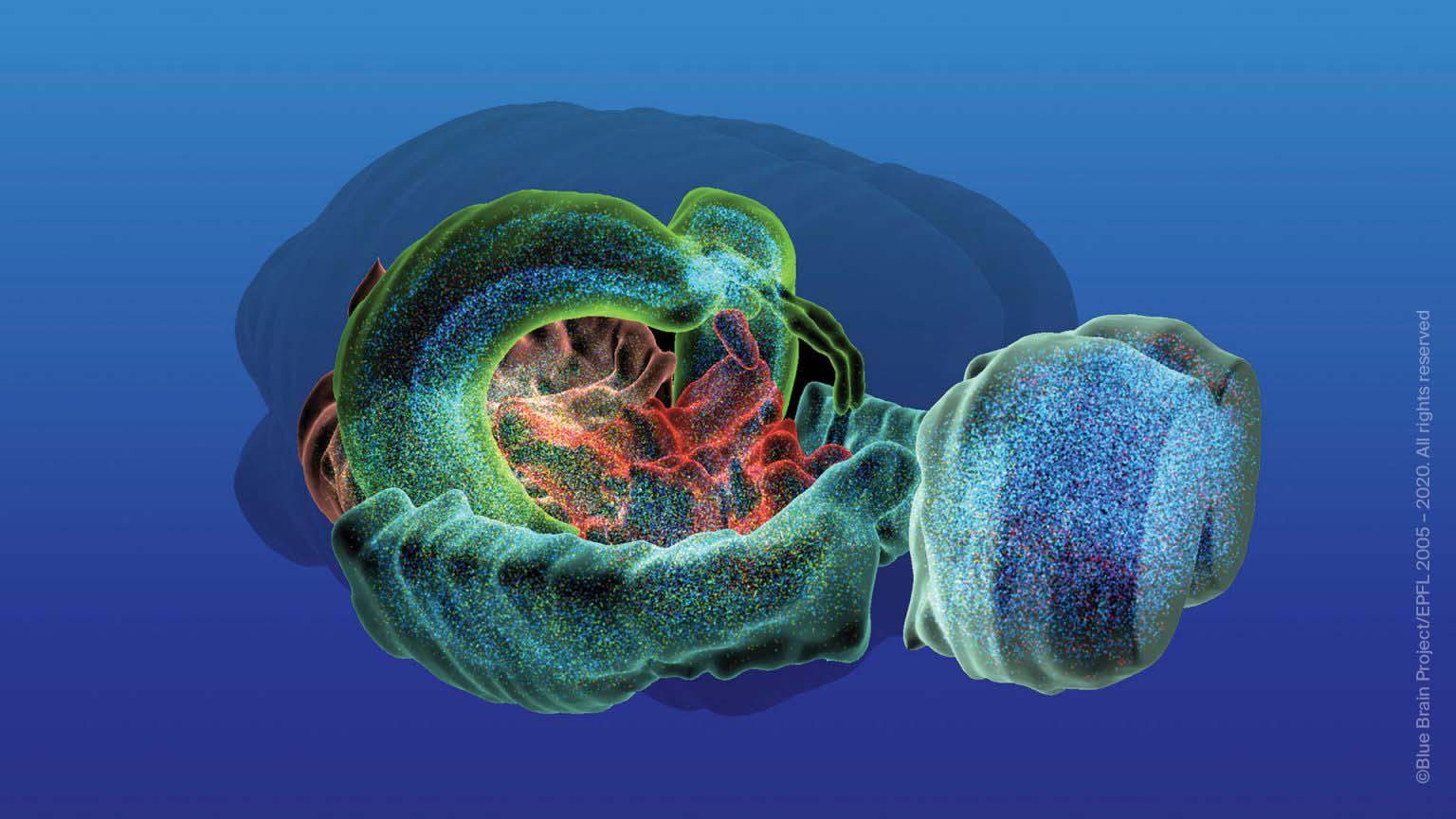Проф. Хенри Маркъм: Човешкият мозък работи в 11 измерения