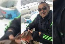 риба Аркутино