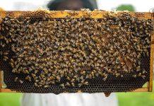 пчелите в България