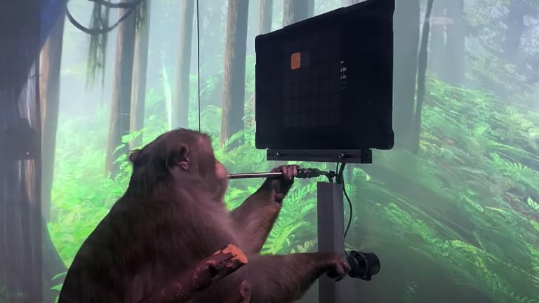 Neuralink постави чип в мозъка на маймуна, за да играе Pong с ума си