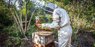 пчелите мрат масово
