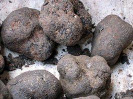 черни трюфели