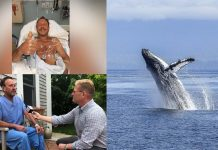 кит водолаз