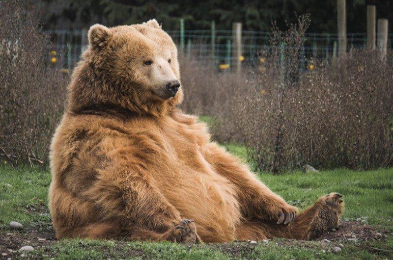 мечката от Белица